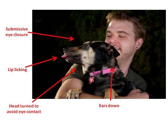 Abbracciare il cane: come viene percepito?