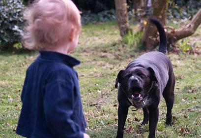 Aggressioni di cani sui bambini | Educani.it