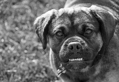 Educazione dei cani problematici o aggressivi | Educani.it