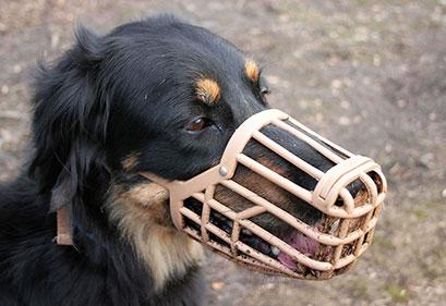 Come abituare un cane alla museruola | Educani.it