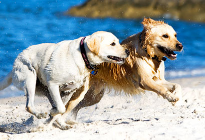 Educazione dei cani adulti | Educani.it