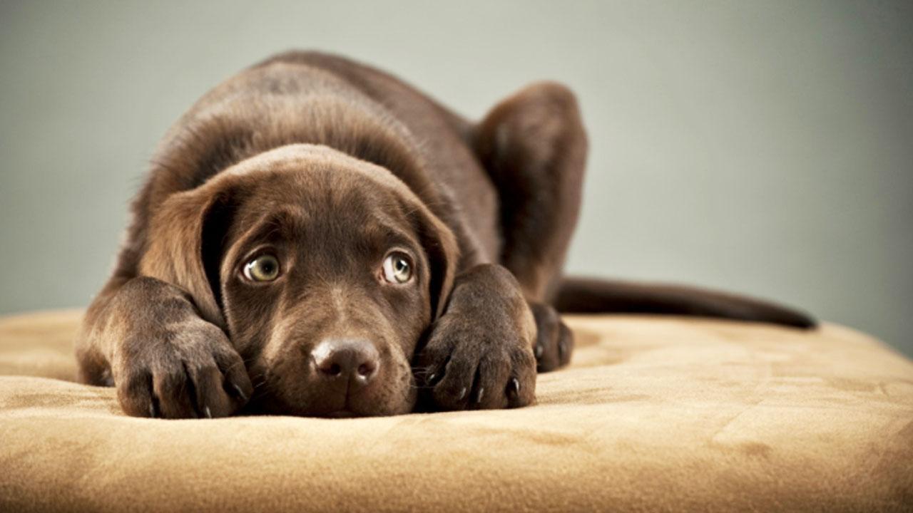 Cane triste e impaurito - Educazione del cane solo con metodi positivi - Educani.it