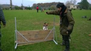 Laura Rossin e l'educazione del cane